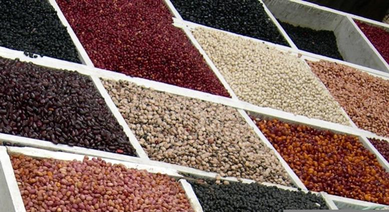 legumbres egipto