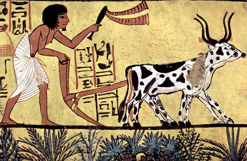 Un poco de historia: Lentejas en el Egipto Faraónico